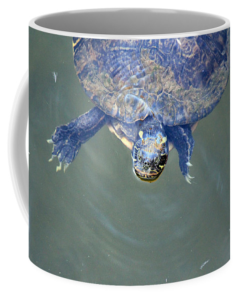 Turtle Coffee Mug featuring the photograph Got Any Food? by Lorraine Baum