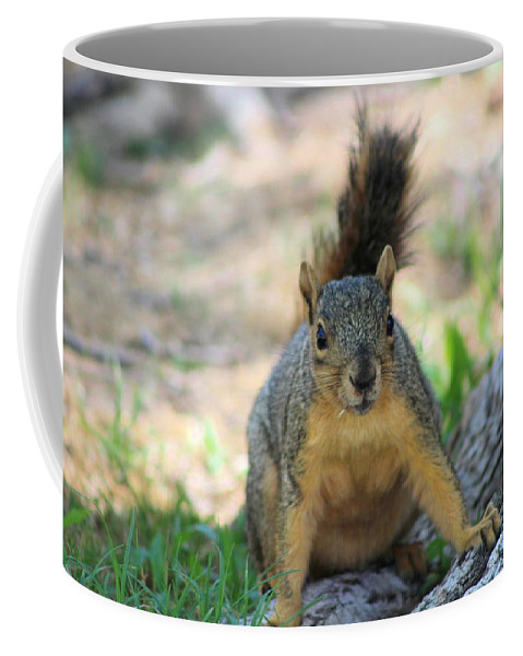 Squirrel Coffee Mug featuring the photograph Got To Run by Colleen Cornelius