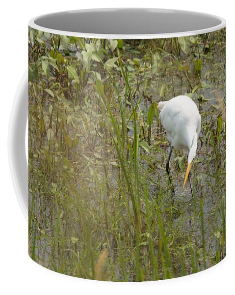Great Egret Coffee Mug featuring the photograph Grabbing Lunch by Linda Kerkau