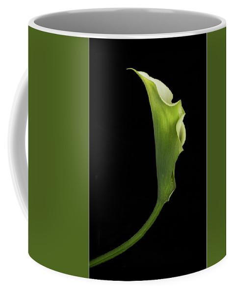 Flora Coffee Mug featuring the photograph Graceful Curve 2 by Joy Schmitz