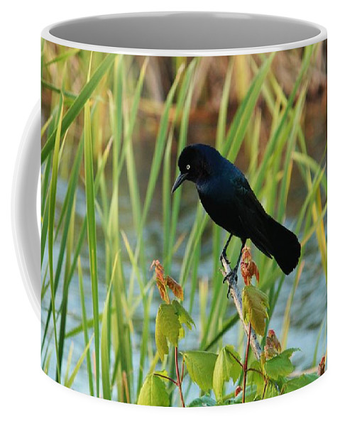 Common Grackle Coffee Mug featuring the photograph Grackle Hiding In Marsh by Cynthia Guinn