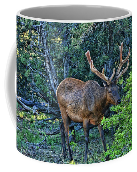 Grazing Coffee Mug featuring the photograph Grand Canyon # 33 - Grazing Elk by Allen Beatty
