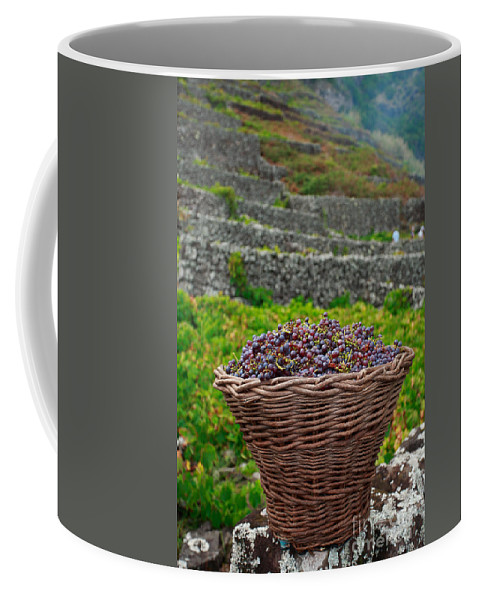 Basket Coffee Mug featuring the photograph Grape Harvest by Gaspar Avila