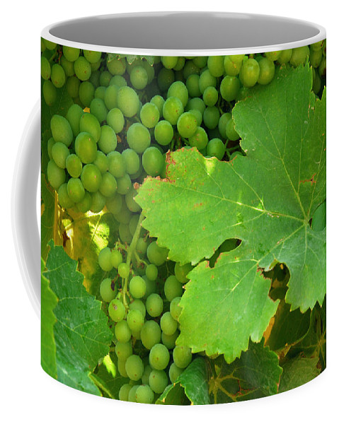 Provence Coffee Mug featuring the photograph Grape Vine Heavy With Green Grapes by Anne Keiser
