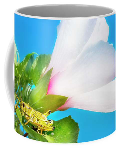 Lubber Grasshopper Coffee Mug featuring the photograph Grasshopper And Blue Sky by Mark Andrew Thomas