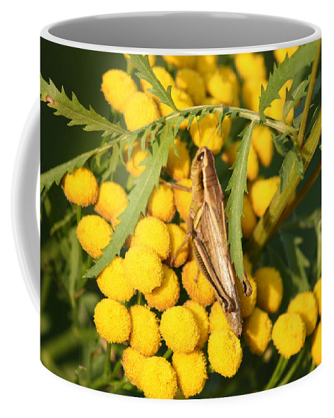 Bug Grasshopper Plants Flowers Nature Yellow Wild Life Green Weed Coffee Mug featuring the photograph Grasshopper by Andrea Lawrence