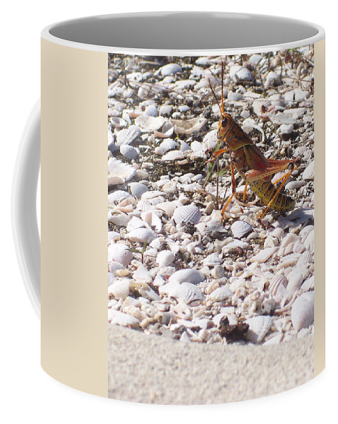 Florida Coffee Mug featuring the photograph Grasshopper by Chris Andruskiewicz