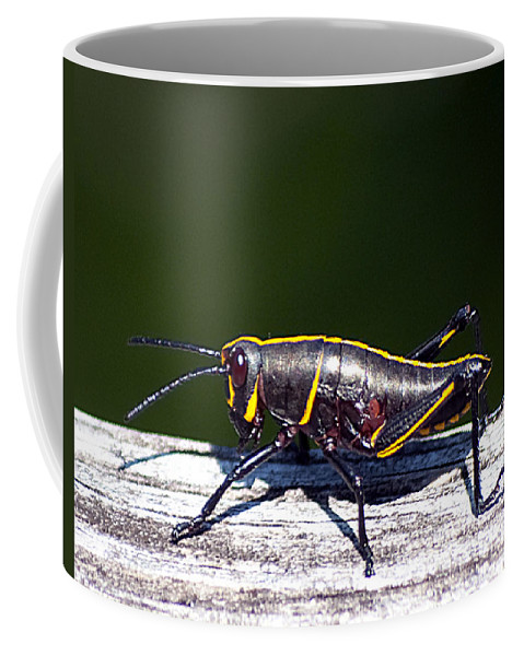 Wildlife Coffee Mug featuring the photograph Grasshopper Nymph by Kenneth Albin