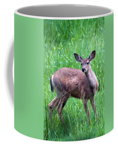 Deer Coffee Mug featuring the photograph Grassy Doe by Randall Ingalls
