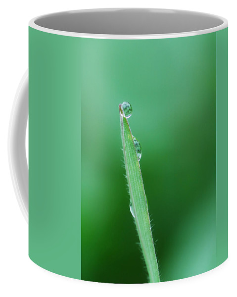 Grass Coffee Mug featuring the photograph Gravity Defied by Donna Blackhall