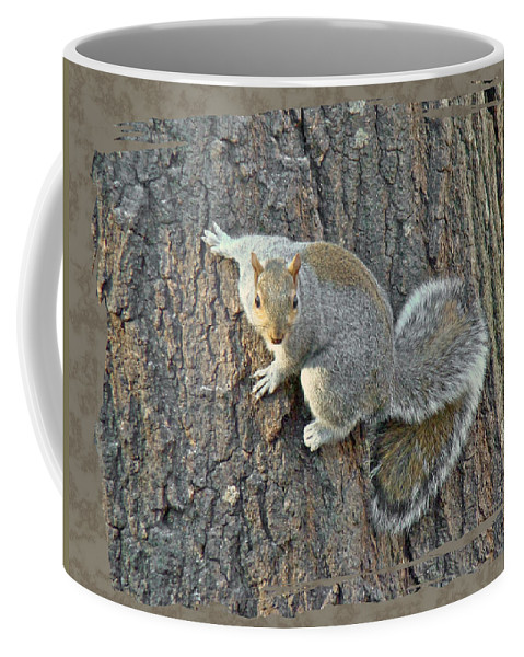 Eastern Coffee Mug featuring the photograph Gray Squirrel - Sciurus Carolinensis by Mother Nature