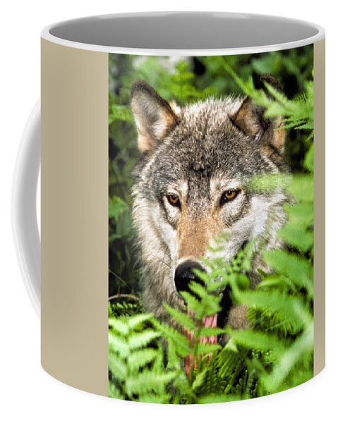 Gray Wolf Coffee Mug featuring the photograph Gray Wolf In The Woods by Larry Allan