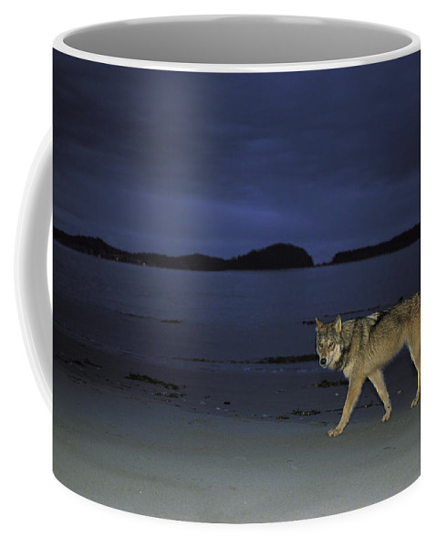 Pacific Ocean Coffee Mug featuring the photograph Gray Wolf On Beach At Twilight by Joel Sartore