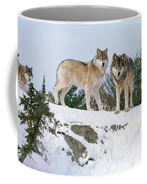 Photography Coffee Mug featuring the photograph Gray Wolves Canis Lupus In A Forest by Panoramic Images
