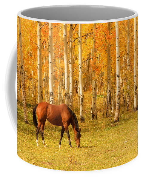 Horse Coffee Mug featuring the photograph Grazing Horse In The Autumn Pasture by James BO Insogna