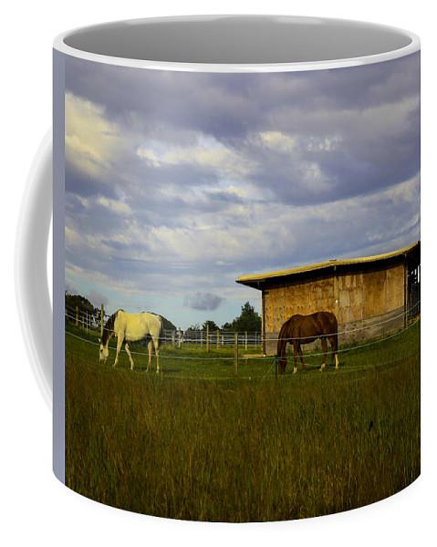 Horses Coffee Mug featuring the photograph Grazing In Bridgehampton - New York by Madeline Ellis