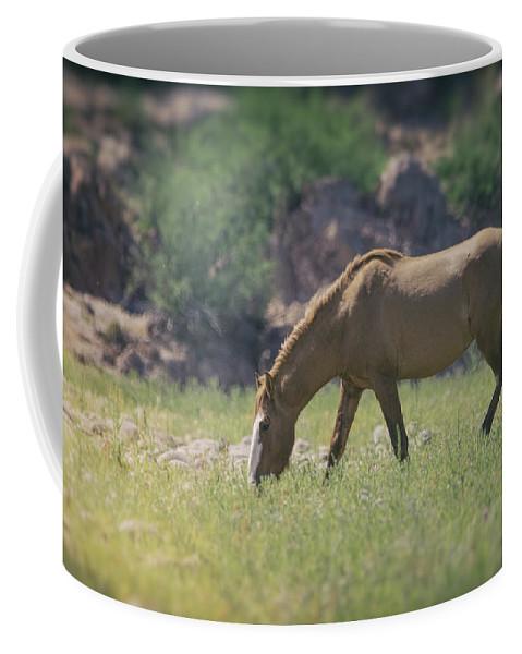Wild Horse Coffee Mug featuring the photograph Grazing Wild Mustang by Saija Lehtonen