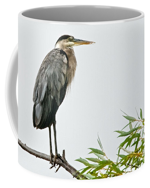 Nature Coffee Mug featuring the photograph Great Blue Heron in the Rain by Zayne Diamond Photographic