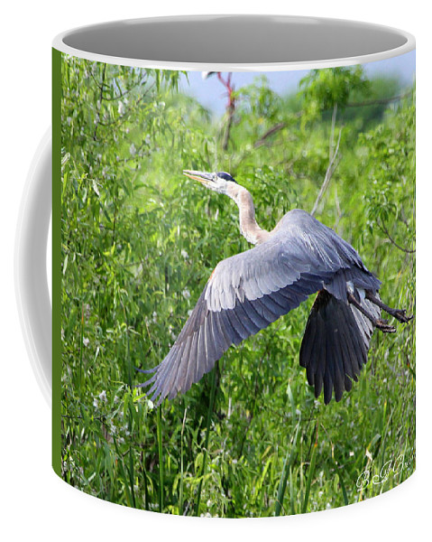 Great Blue Heron Coffee Mug featuring the photograph Great Blue Heron Takeoff by Barbara Bowen