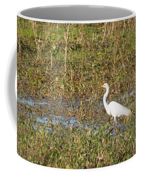 Great Egret Coffee Mug featuring the photograph Great Egret Fishing by Linda Kerkau
