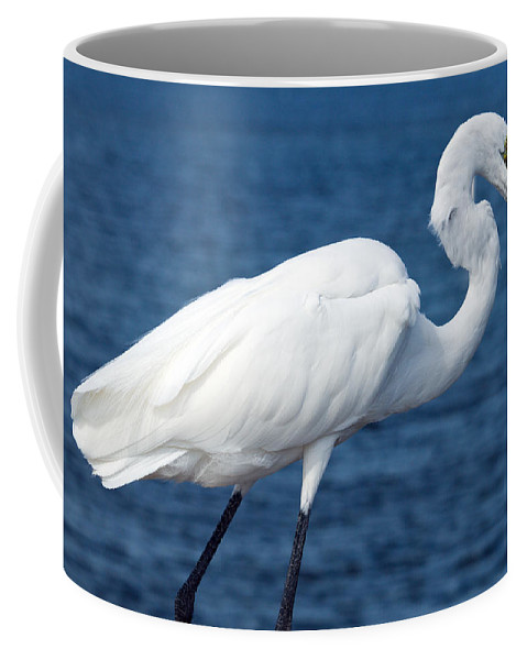Great; Egret; Ardea; Alba; Eating; Eat; Fish; Redfish; Red; Bird; Seabird; Ocean; Indian; River; Lag Coffee Mug featuring the photograph Great Egret In Florida by Allan Hughes