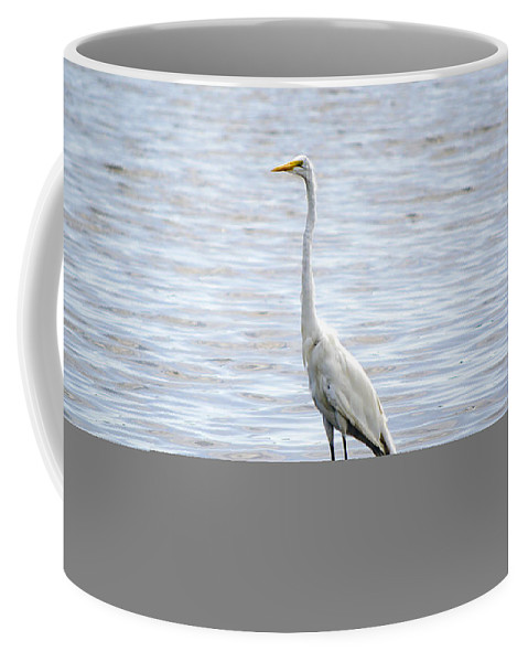 Egret Coffee Mug featuring the photograph Great Egret by Kenneth Albin