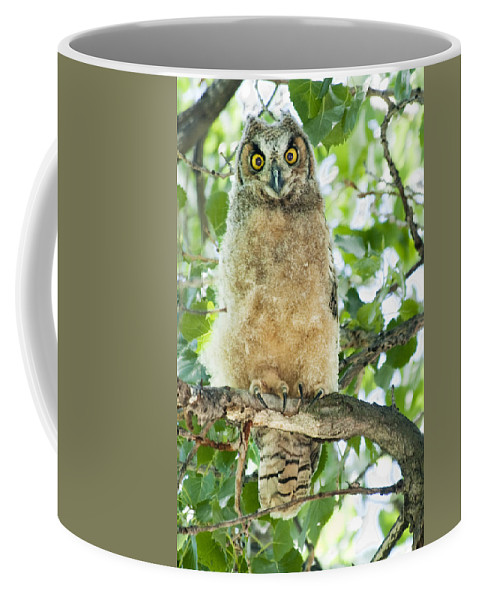 Owl Coffee Mug featuring the photograph Great Horned Owl by Gary Beeler