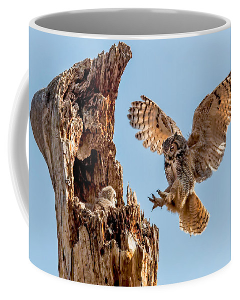 Bubo Virginianus Coffee Mug featuring the photograph Great Horned Owl Returning To Her Nest by Dawn Key