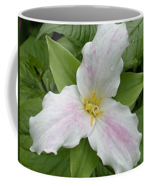 Trillium Coffee Mug featuring the photograph Great White Trillium by Nelson Strong