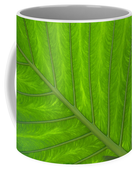 Eden Project Coffee Mug featuring the photograph Green Abstract No. 4 by Helen Northcott