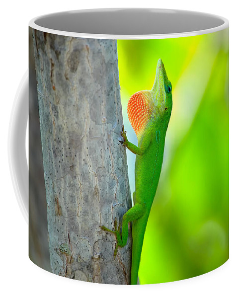 Lizard Coffee Mug featuring the photograph Green Anole by Rich Leighton