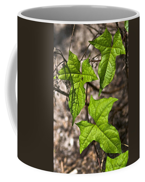 Green Coffee Mug featuring the photograph Green Arrowheads by Christopher Holmes