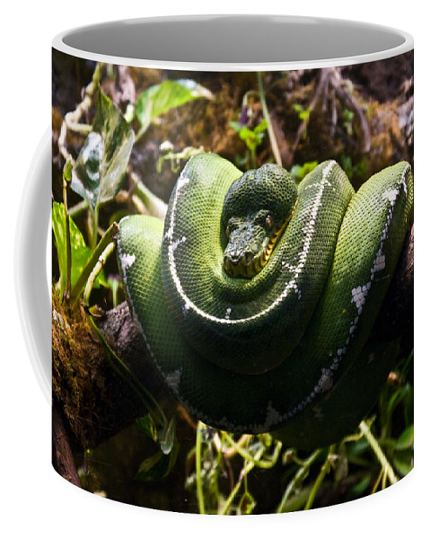 Green Coffee Mug featuring the photograph Green Boa by Douglas Barnett