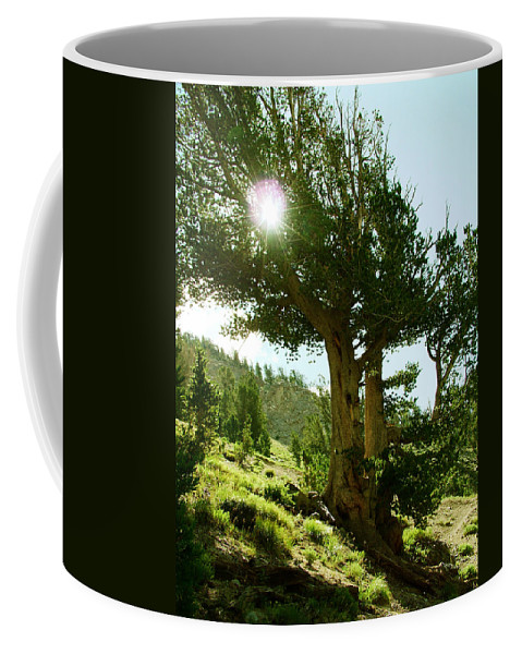 Old Tree Coffee Mug featuring the photograph Green Desert by Micah Campbell