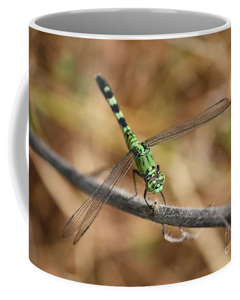 Green Dragonfly Coffee Mug featuring the photograph Green Dragonfly On Twig by Carol Groenen