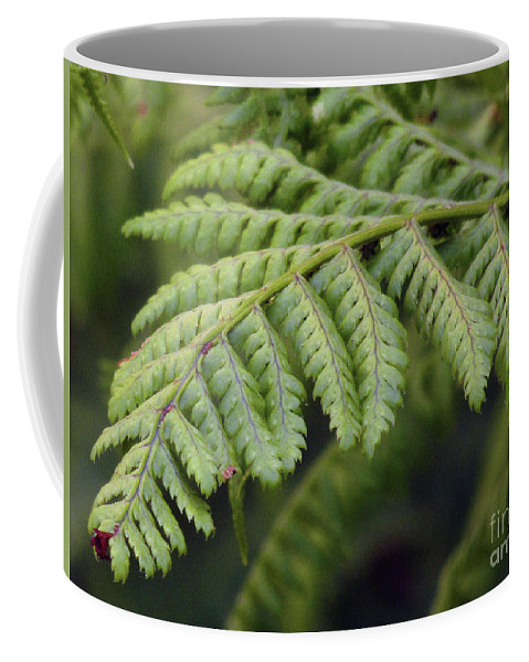 Fern Coffee Mug featuring the photograph Green Fern by Kim Tran