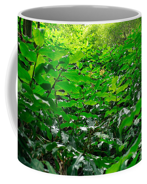 Deep Forest Coffee Mug featuring the photograph Green Foliage by Gaspar Avila