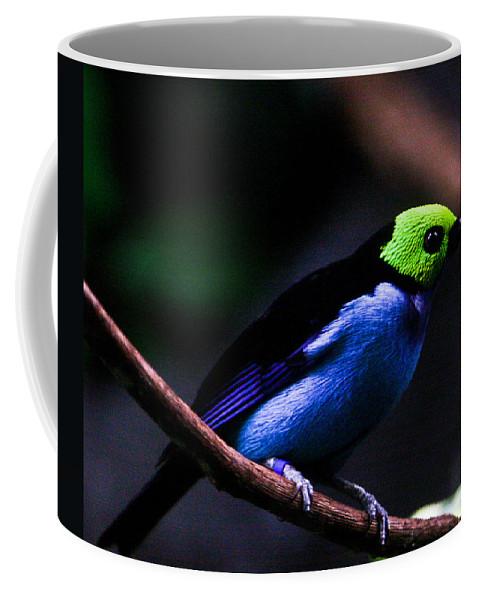 Green Coffee Mug featuring the photograph Green Headed Bird by Douglas Barnett