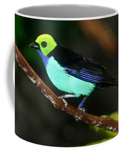 Green Coffee Mug featuring the photograph Green Headed Bird On Branch by Douglas Barnett