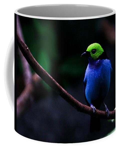 Green Coffee Mug featuring the photograph Green Headed Bird Profile by Douglas Barnett