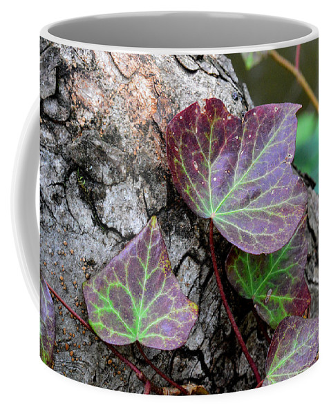 Ivy Coffee Mug featuring the photograph Green Heart by Donna Blackhall