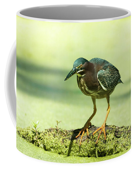 Animal Coffee Mug featuring the photograph Green Heron In Green Algae by Robert Frederick