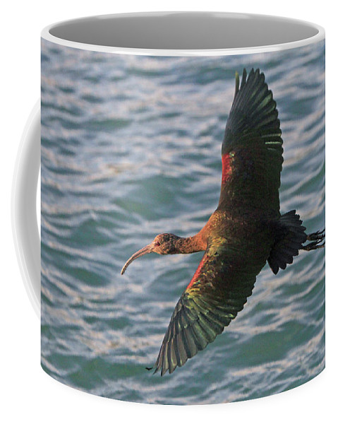 Ibis Coffee Mug featuring the photograph Green Ibis 6 by Shoal Hollingsworth
