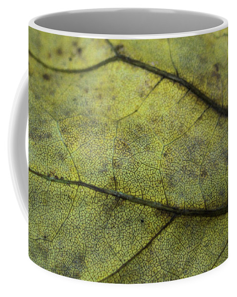 Nature Coffee Mug featuring the photograph Green Leaf by Linda Sannuti