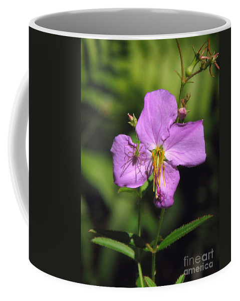Coffee Mug featuring the photograph Green Lynx Spider On Meadow Beauty by Peg Urban