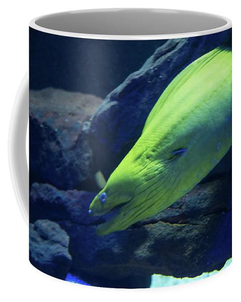 Green Moray Eel Coffee Mug featuring the photograph Green Moray Eel by JG Thompson