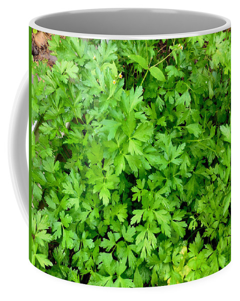 Parsley Coffee Mug featuring the painting Green Parsley 1 by Jeelan Clark