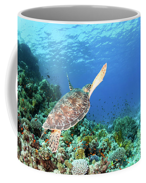 Green Coffee Mug featuring the photograph Green Sea Turtle by Hagai Nativ