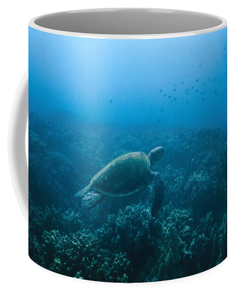 Mexico Coffee Mug featuring the photograph Green Sea Turtle Swimming Over Coral by James Forte