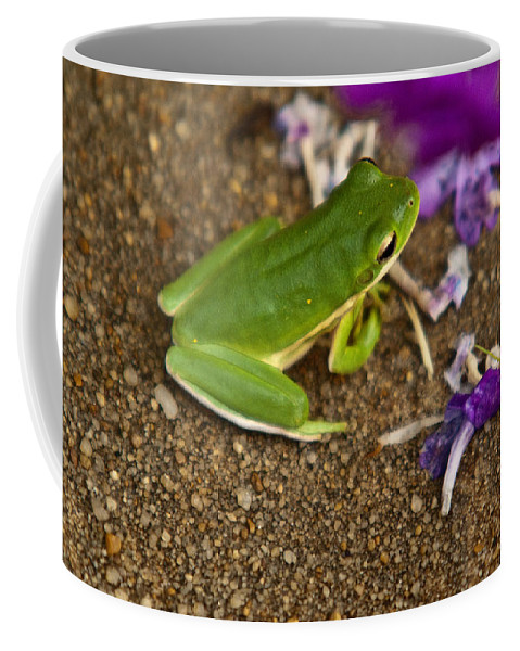 Cumberand Coffee Mug featuring the photograph Green Tree Frog And Flowers by Douglas Barnett